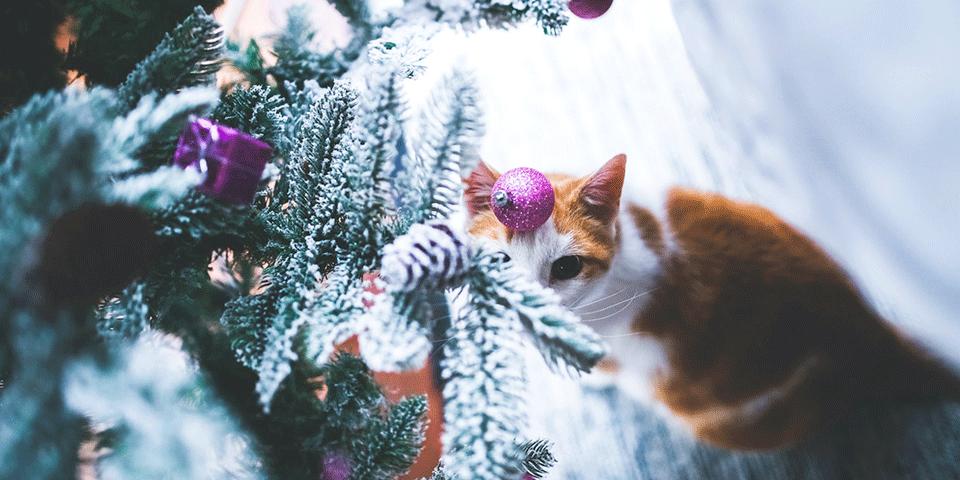 идеи для зимы, елка, кот