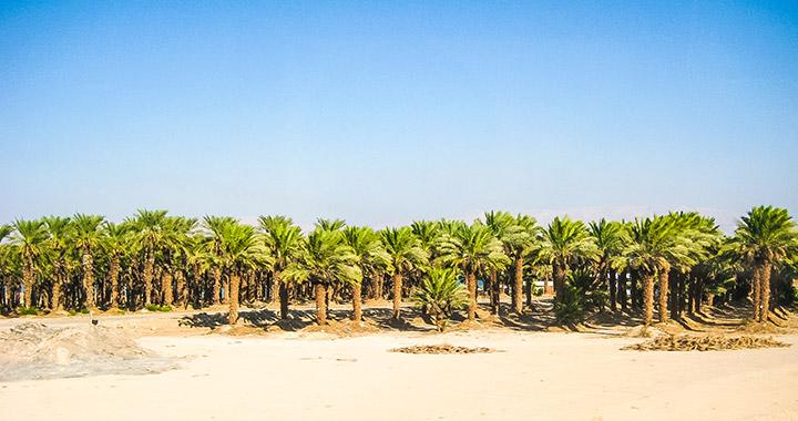 Пальмы на Мертвом море