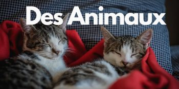Названия животных на французском языке