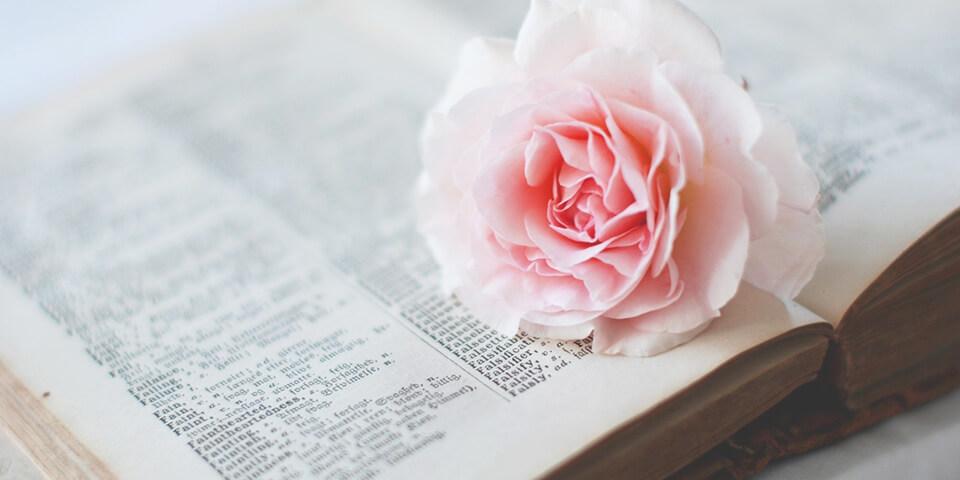 словарь, цветок, иностранный язык