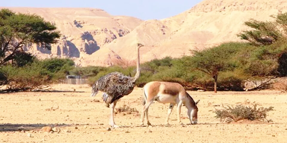 эйлат, израиль, парк тимна, национальный заповедник хай-бар
