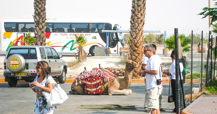 На пути к Мертвому морю по израильской пустыне