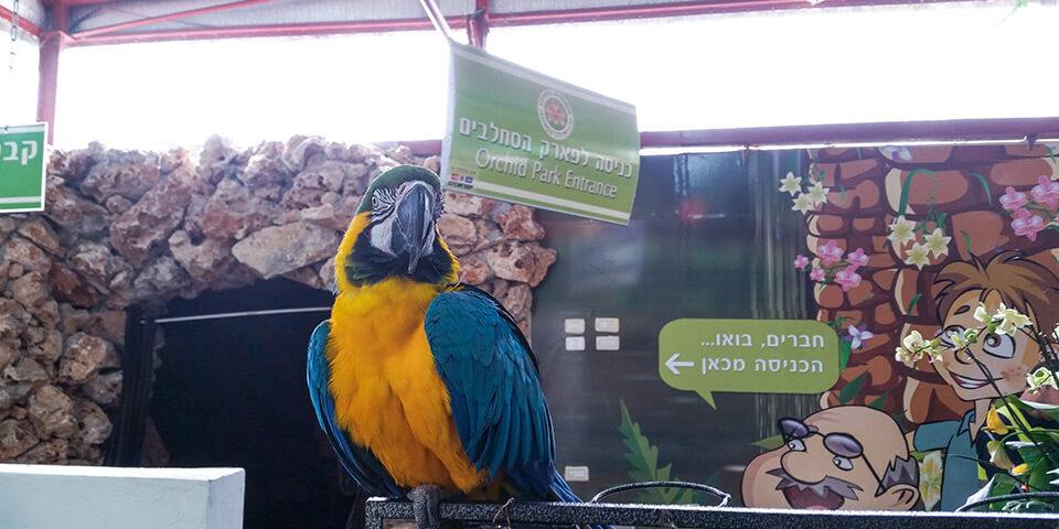 Попугай, парк Утопия, Израиль