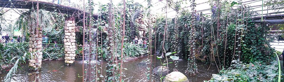 Тропический лес, парк Утопия, Израиль