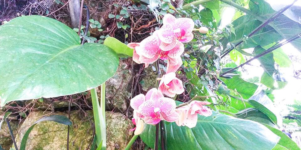 Орхидея в парке Утопия, Израиль