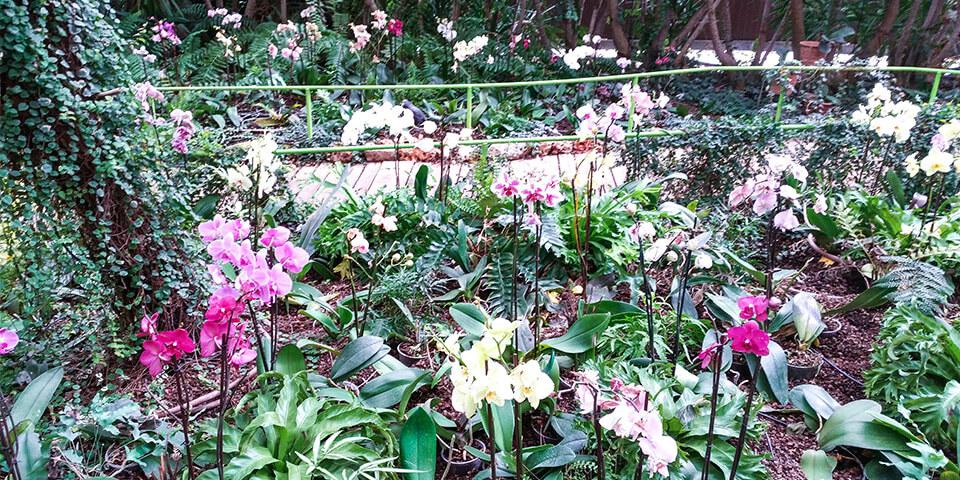 Растения, парк Утопия, Израиль