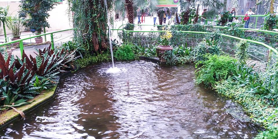 Фонтан, пруд, парк Утопия, Израиль