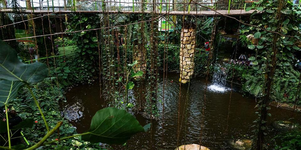 Тропические джунгли, парк Утопия, Израиль