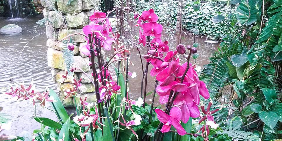 Орхидеи в парке Утопия, Израиль
