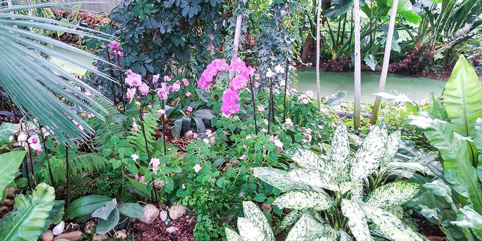 Тропический лес в парке Утопия, Израиль