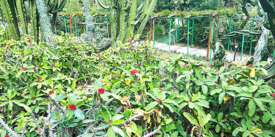 Кактусы, парк Утопия, Израиль