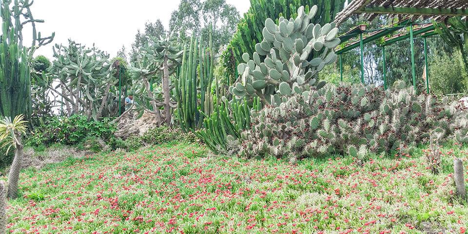 Кактусы и цветы, парк Утопия, Израиль