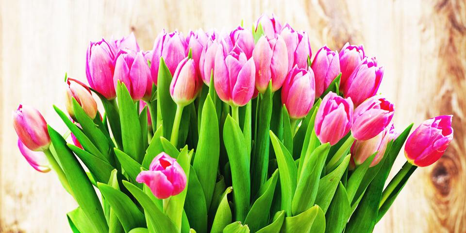 Международный женский день, тюльпаны, праздник, 8 марта